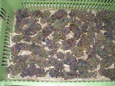 vyroba-slamoveho-vina02